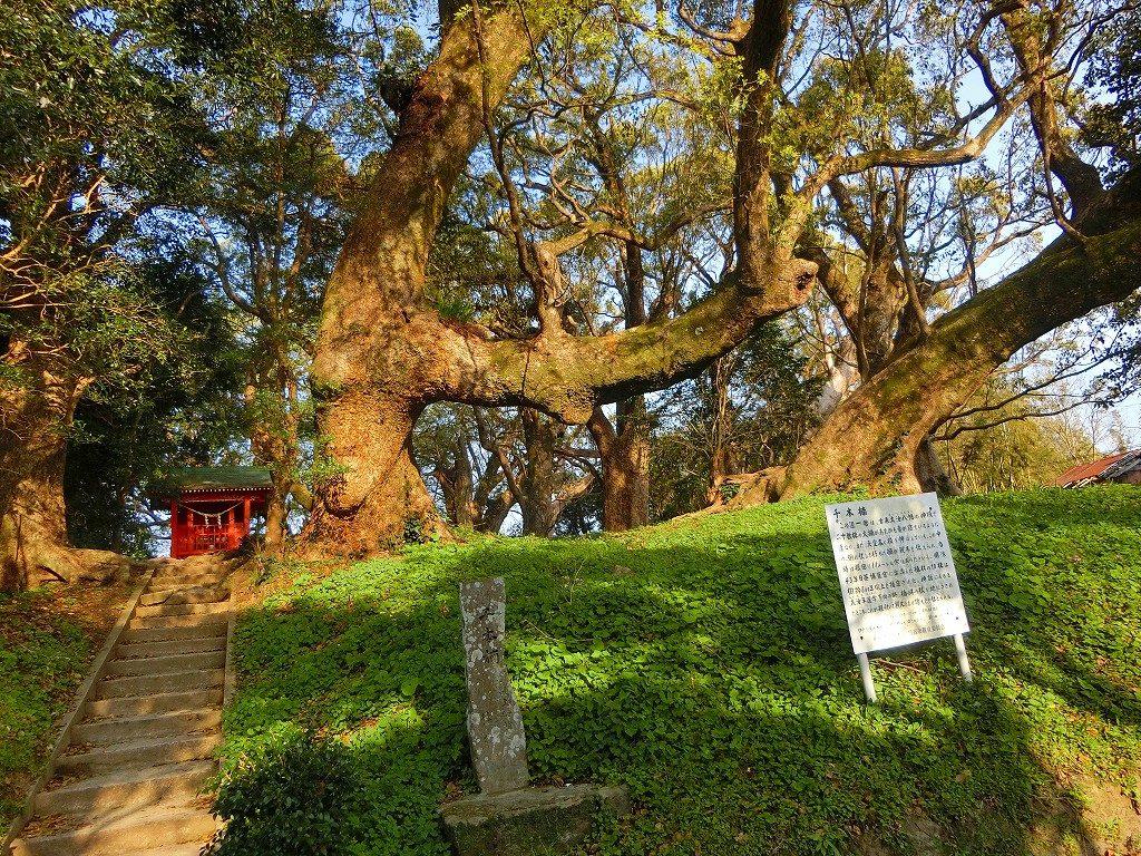 千本楠の神秘的な森です。