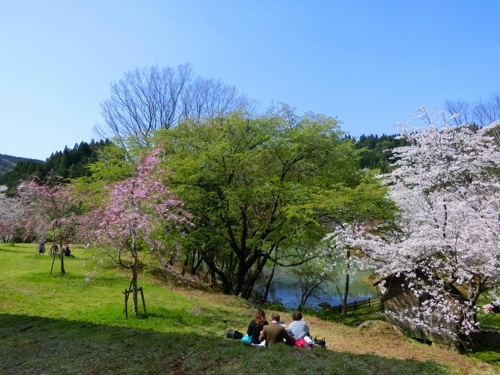 観音ケ池で花見弁当を広げます。
