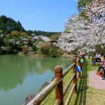観音ヶ池 市民の森は鹿児島で人気ナンバーワンの桜の名所です。