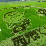 田んぼアートは鹿児島県南九州市にある一見の価値ある景色です。
