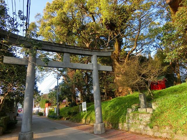 千本楠は大汝牟遅神社の参道脇にあります。