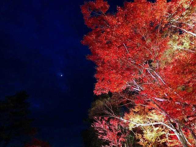 紅葉祭りの曽木ノ滝はおすすめ。
