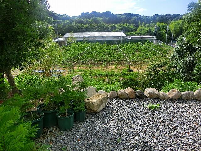 テラスから農園ガーデンの農園が見えます。