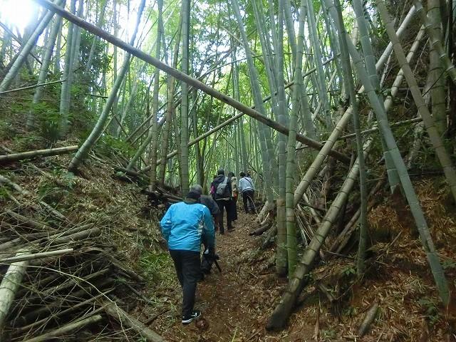 山城の坂道はそれほどきつくありません。