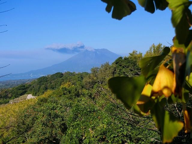 桜島を裏側から高い位置から見られます。