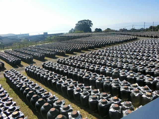 黒酢の壺が畑のように並ぶ壺畑です。