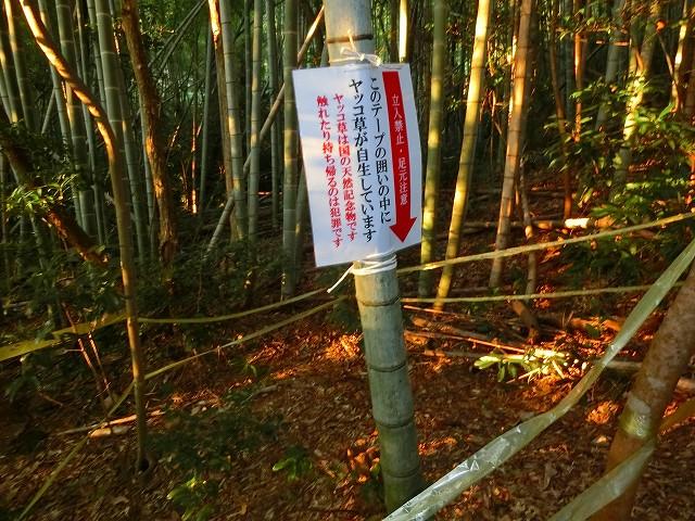 稲荷神社でヤッコソウの場所を教えます。