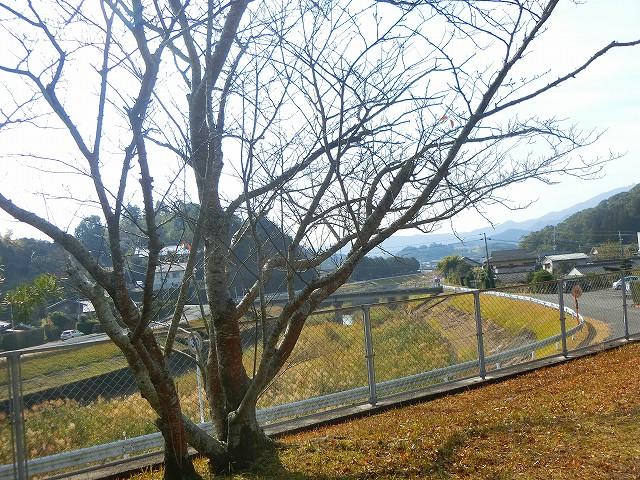 別府城の脇に流れる加世田川が防衛。