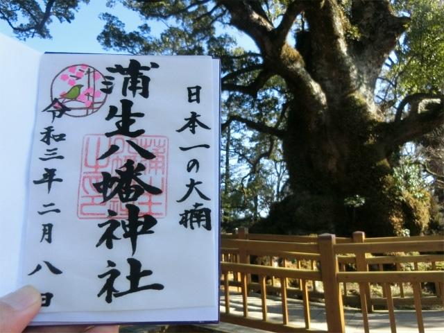 日本一の大楠のご祭神を頂きました。