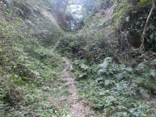 登城の坂道です、昔の人は元気でしたね。