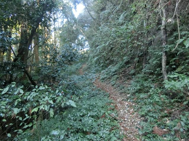 南郷城の登城道には壁が迫ります。