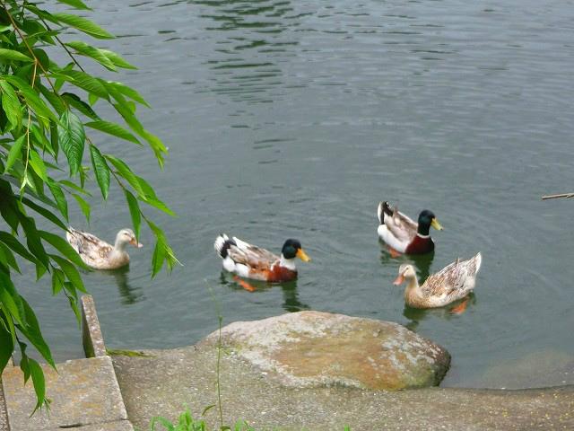 よいやんせの前には内田池があります。