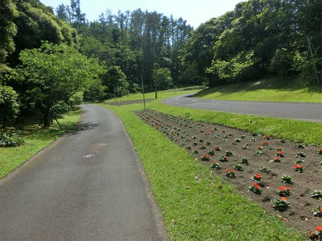 花の並木道の花は植えたばかりでした。