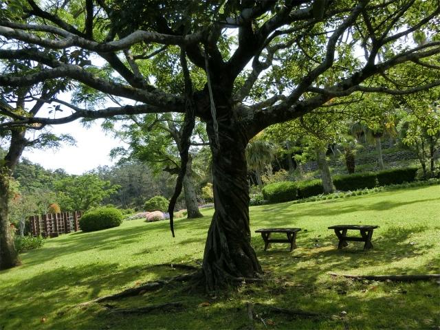 ふれあい広場のほっとする木陰とベンチです。