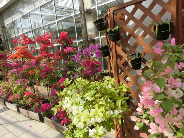 色鮮やかな花の鉢植えです。