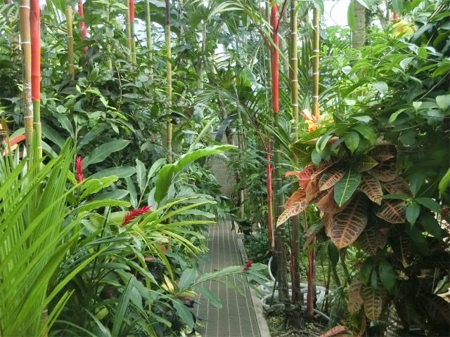 温室の中には珍しい植物もありましたよ。