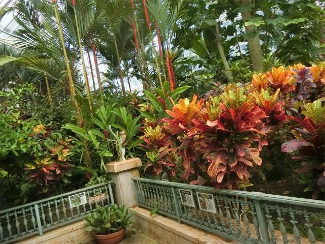 大きな温室には熱帯の植物があります。