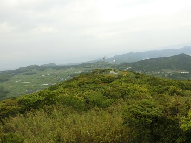 大野岳の麓には茶畑が広がっています。