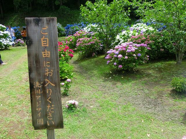 洗川あじさい園の見学は無料ですよ。