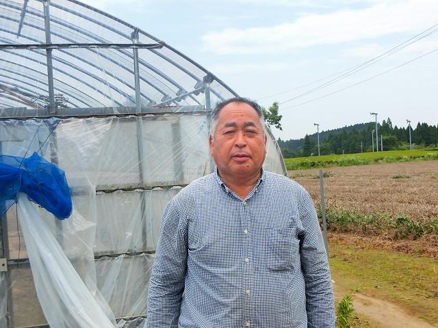鶴田農園の鶴田さんがイチゴを作ります