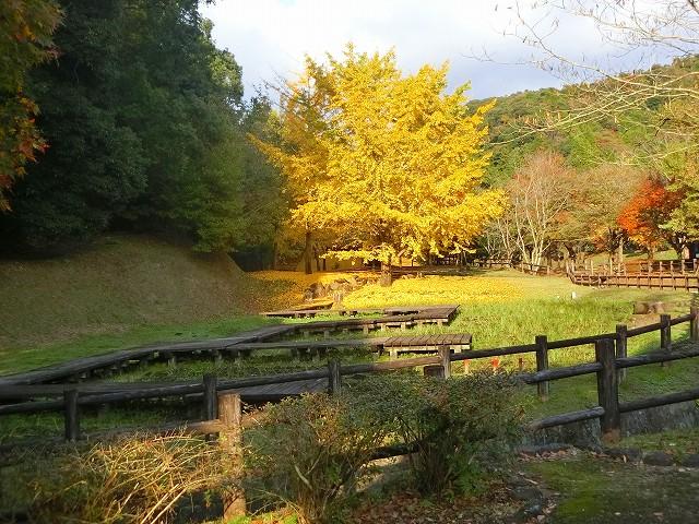 清水岩屋公園の奥にある1本のイチョウの木