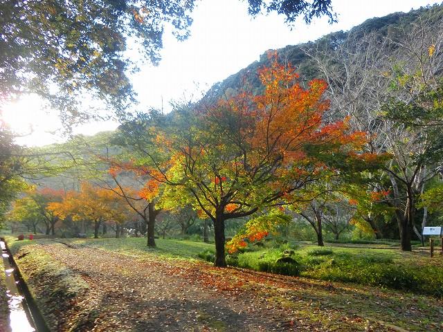 清水岩屋公園を散策してきました。