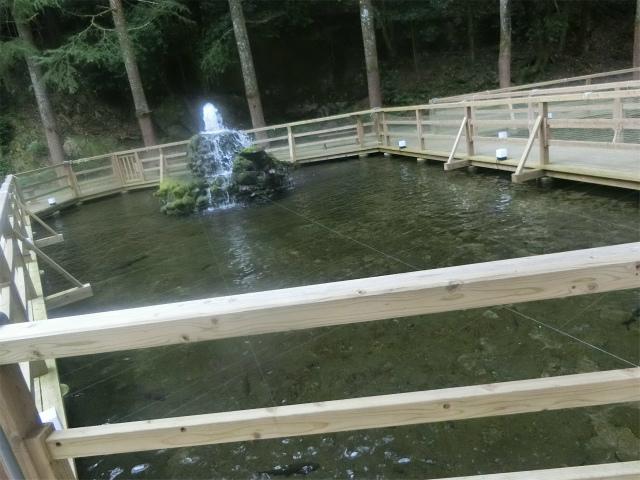 噴水のある池にはコイが泳ぎます。