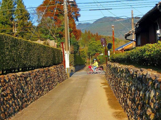 入来麓の町並には玉石垣と生垣があります。