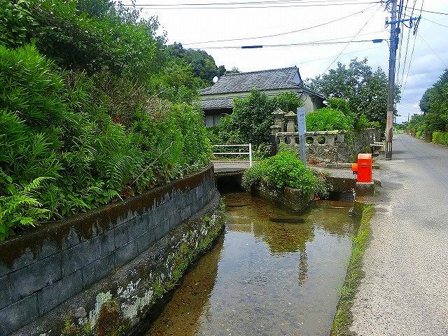 喜入旧麓の用水路は昔のままの清流が流れます。
